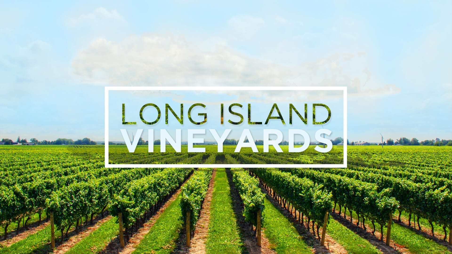 Limo Wine Tours Long Island