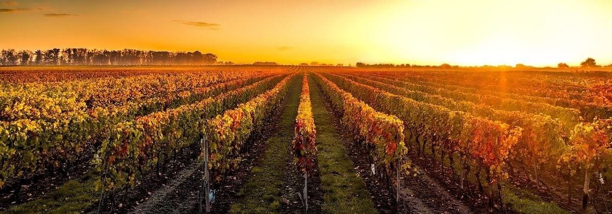 Long Island Wine Limo Tours
