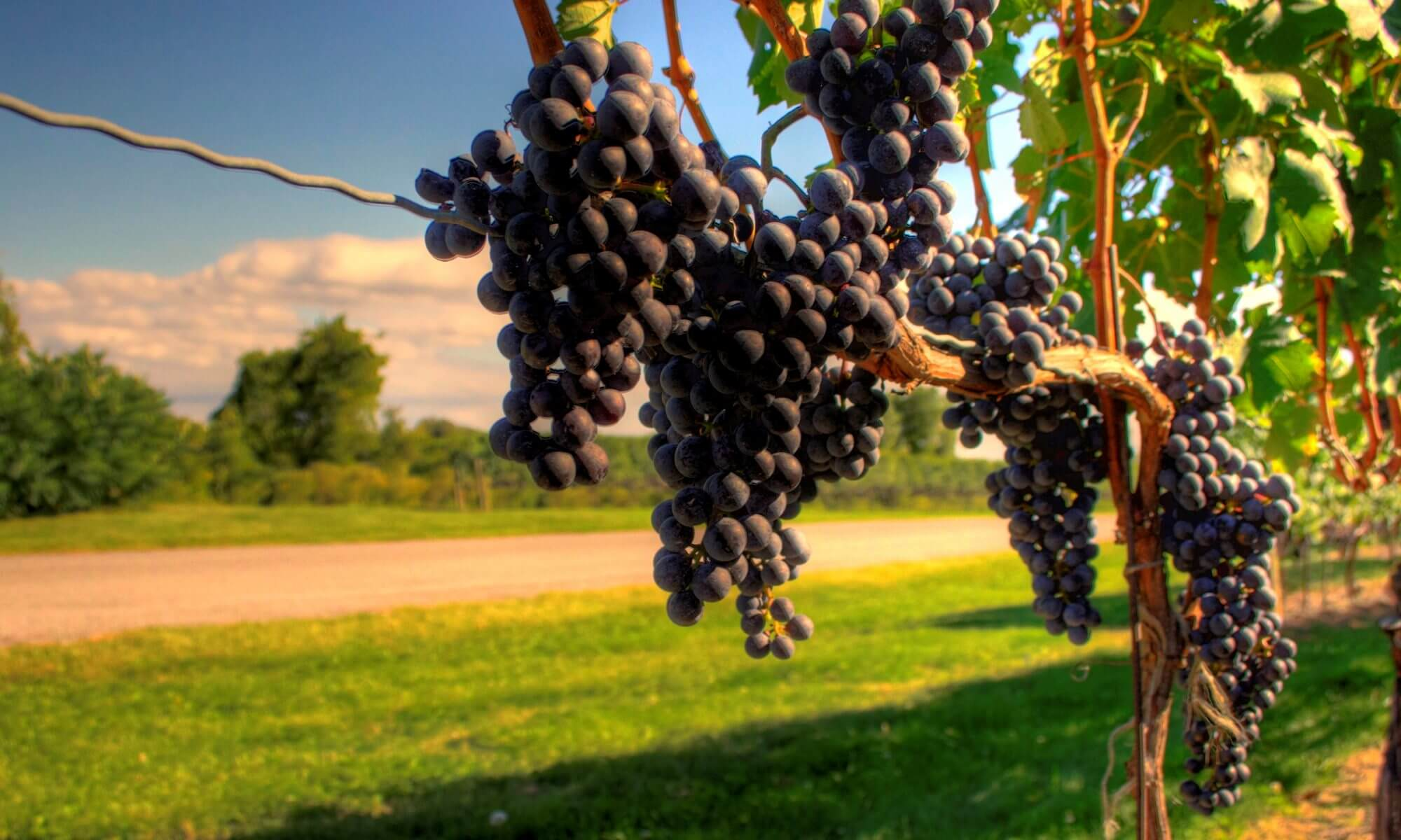 Vineyards & Winery Tours Long Island