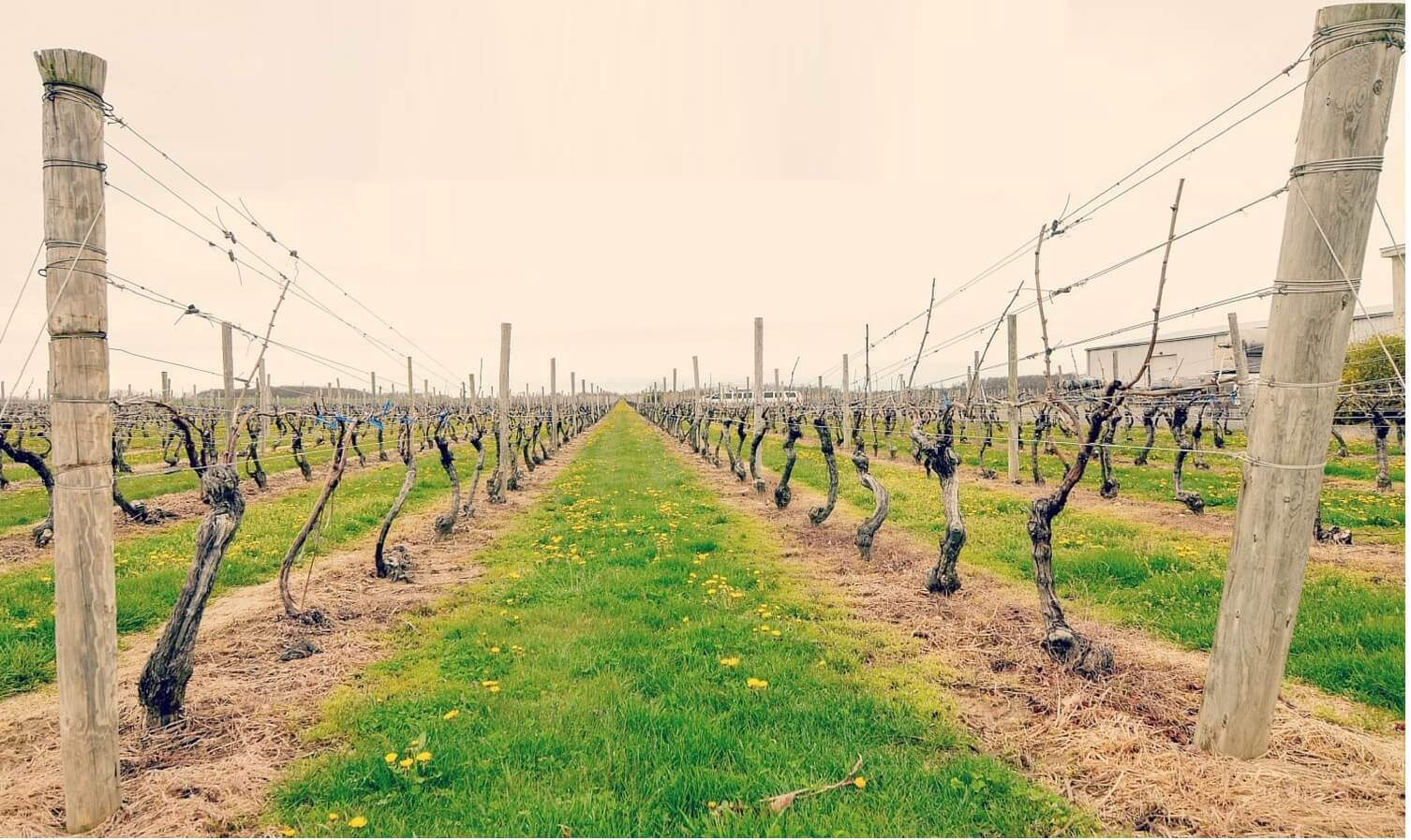 Long Island Wine Trails