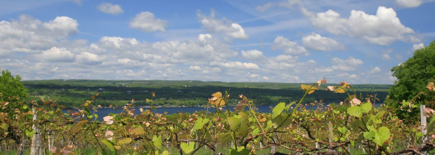 New York State Wine Tours