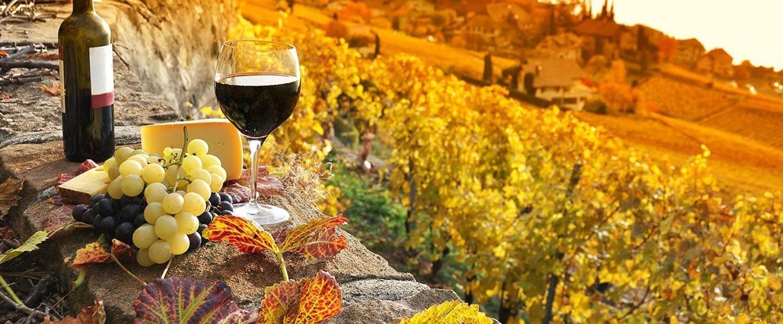 Vineyard Tours NY