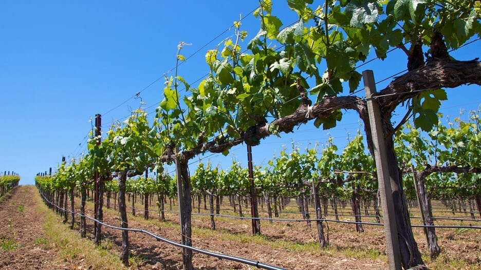 Wine Tour Packages on Long Island