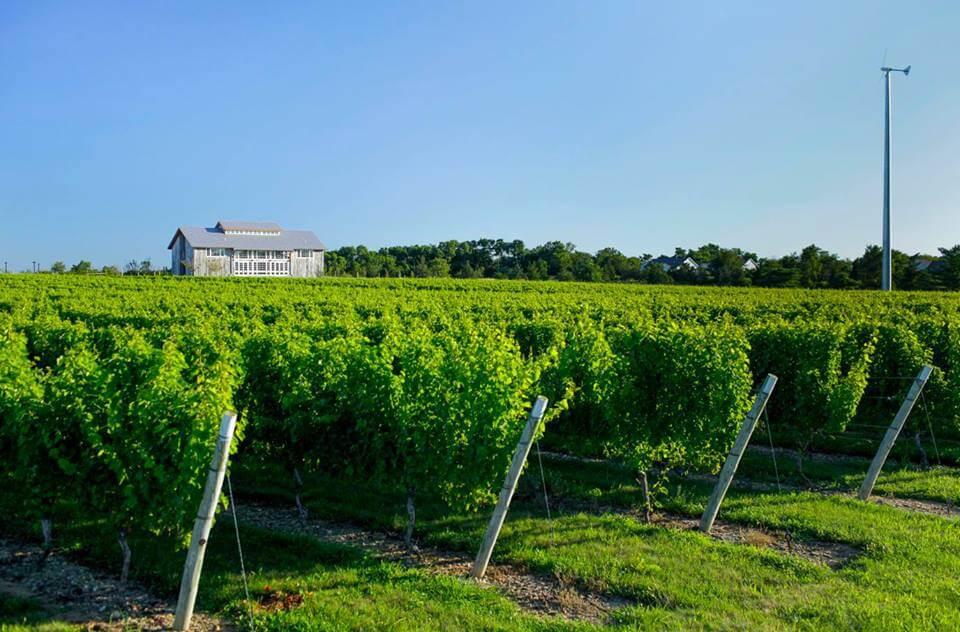 North Fork Vineyard Tours
