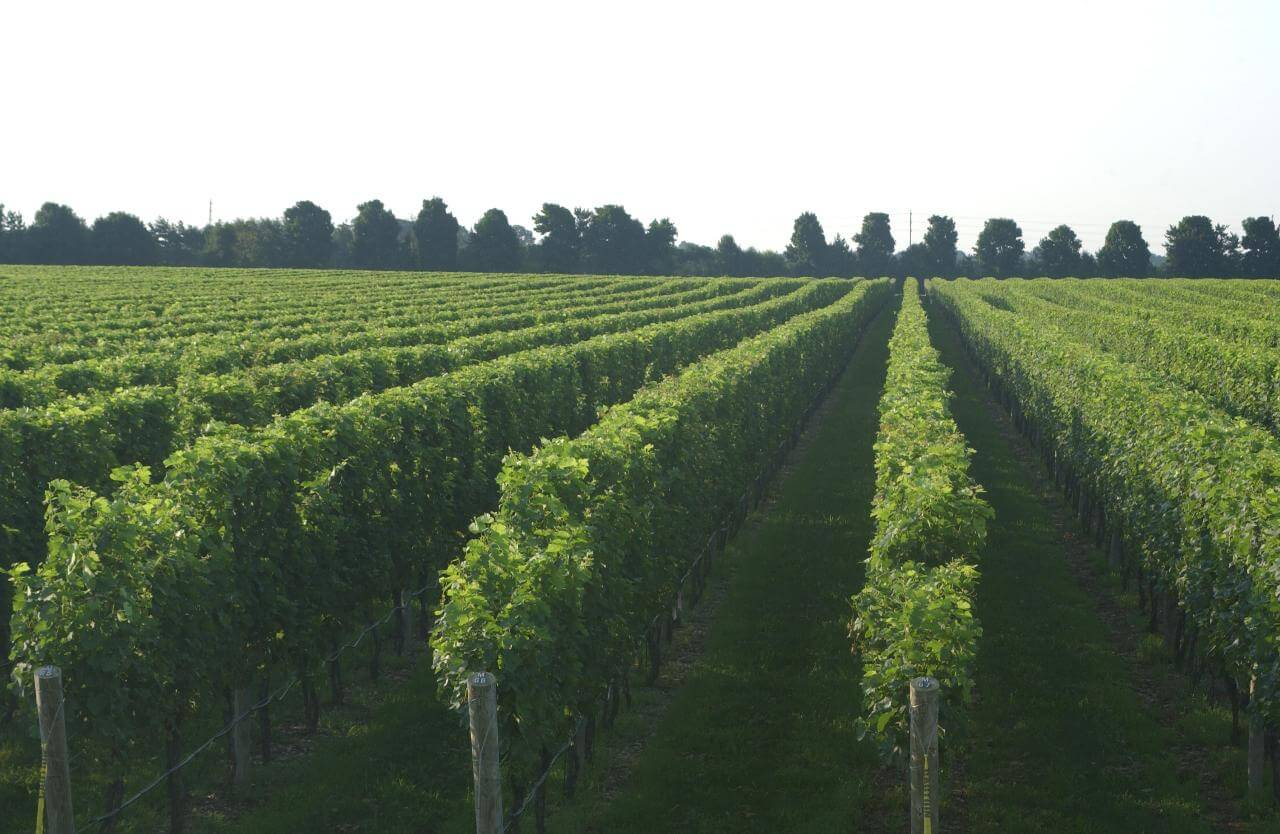 Wineries and Tastings Fees on Long Island