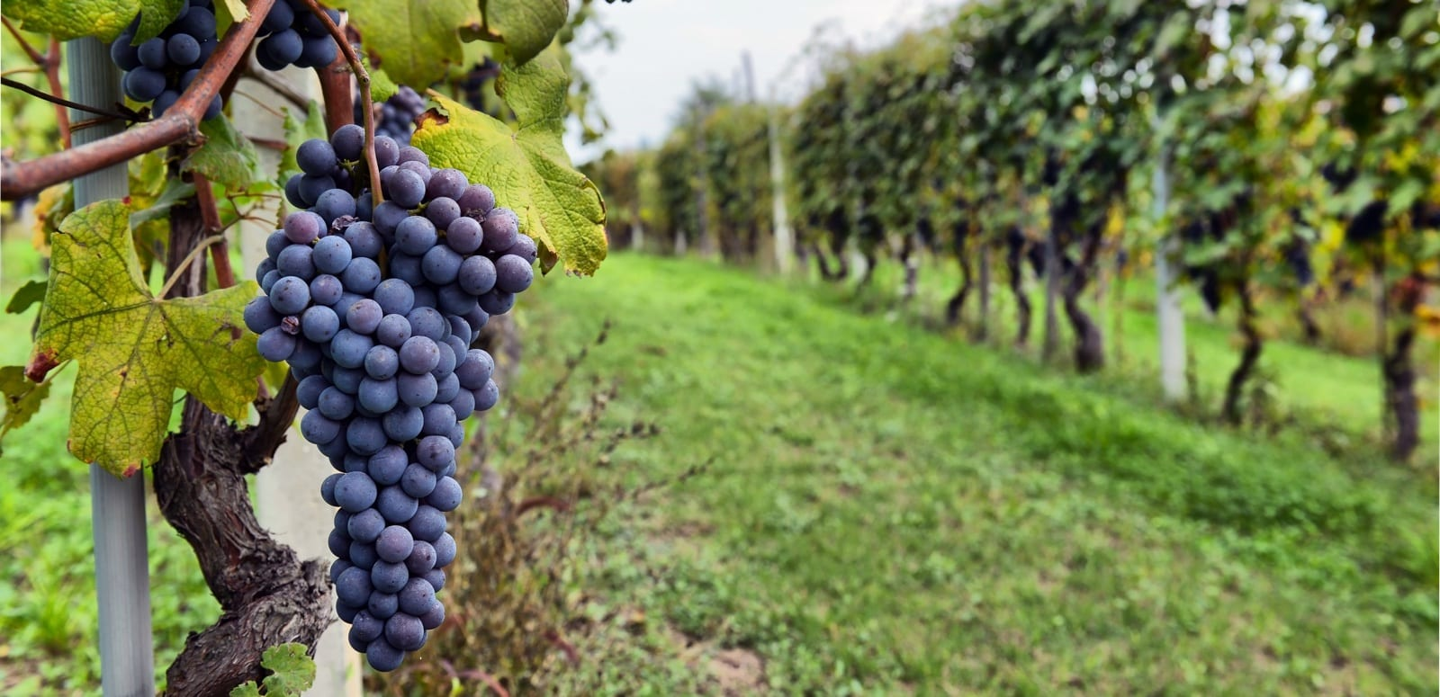 Wine Tour Photos in Long Island NY with LI Vineyard Tours®